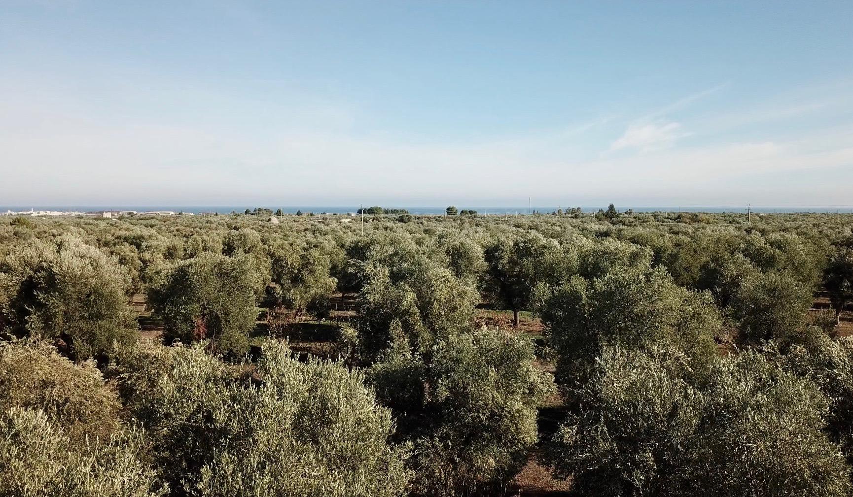 Beteiligung Olivenhain